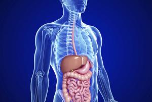 corso kinesiologia metabolica Roma